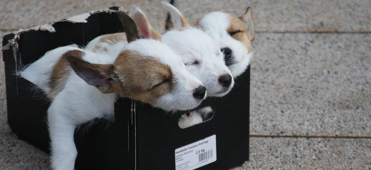 Genug schlafen sonst stillstand auif der waage